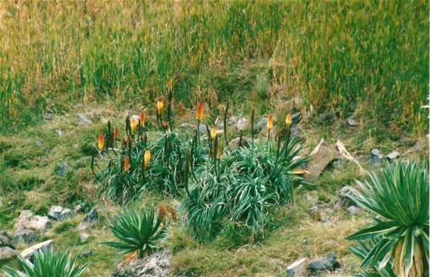 Parque Nacional de las Montañas Simien.