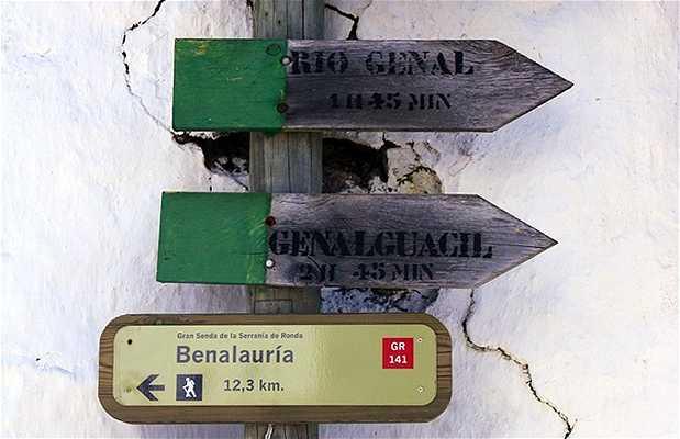 Ruta senderismo Benalauria-Genalguacil