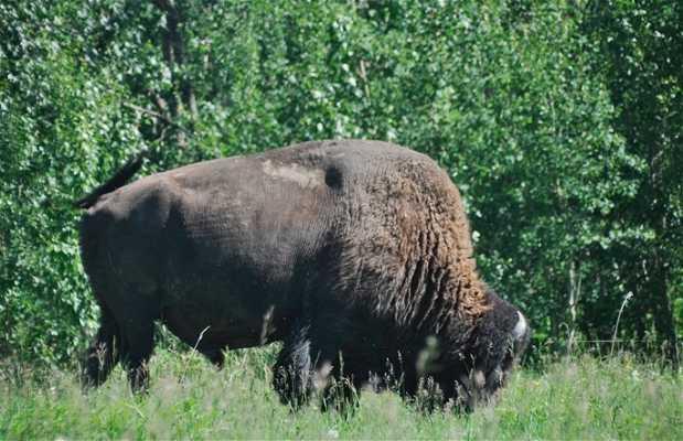 Parc National Elk Island