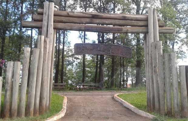Bosque das Grevíleas