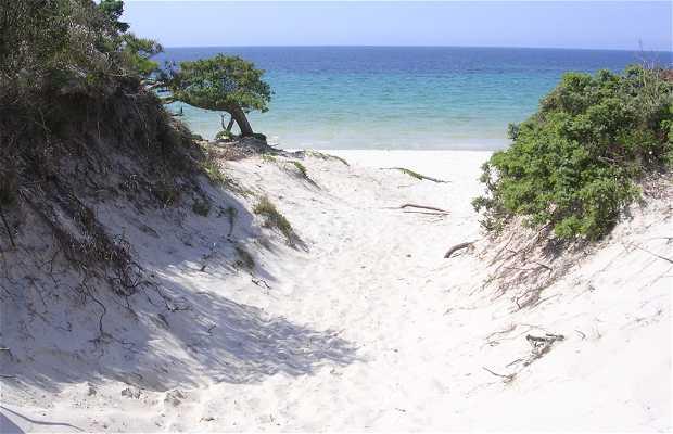 Maria Pia Beach In Alghero 6 Reviews And 28 Photos