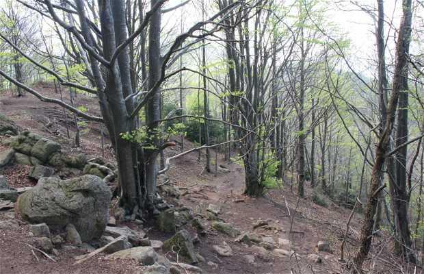 La cima del Puigsacalm