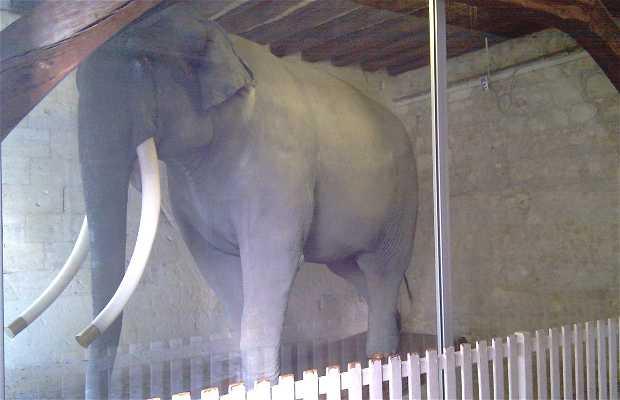 Elefante Fritz - Museo de Bellas Artes