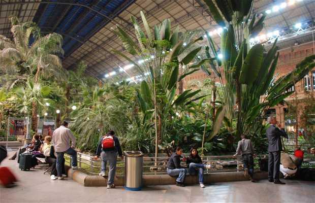 Atocha station greenhouse garden