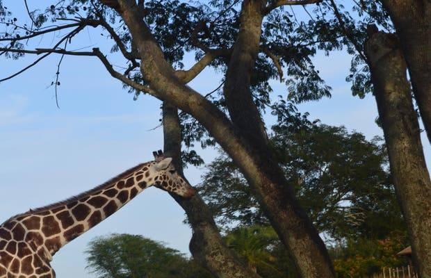 Kilimanjaro Safaris Expedition