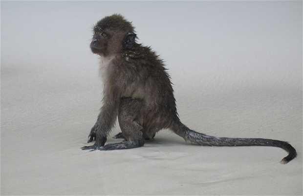 Monkey Island - Ilha dos Macacos