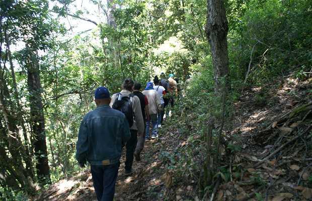 Rutas Ancestrales Araucarias