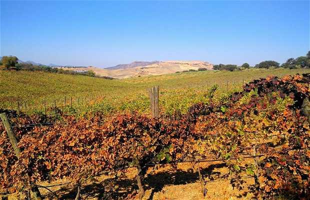 El Colmao Wine and Experiences