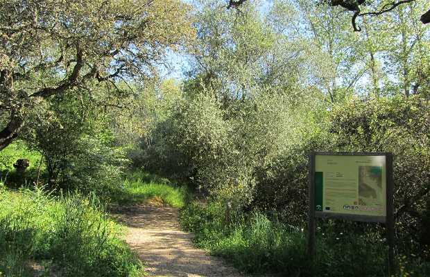 Sendero Botánico Huerta del Rey