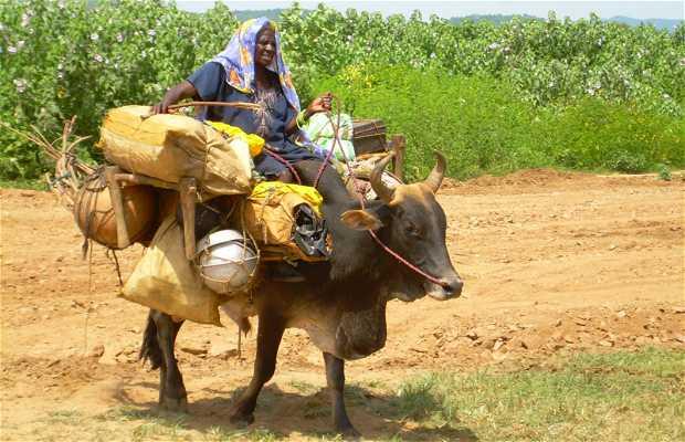 Nómadas de Sudán
