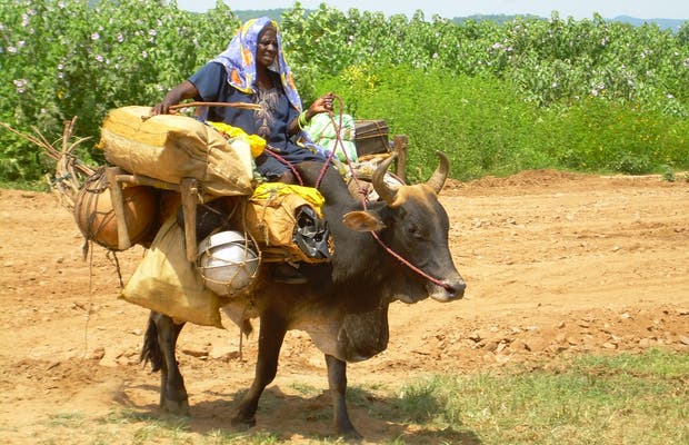 Nomads of Sudan