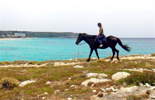 Ruta a caballo por Camí de Cavalls