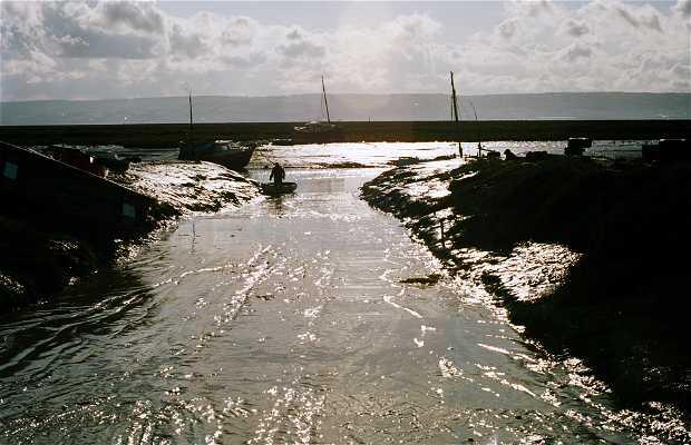Walk 'The Wirral Way'