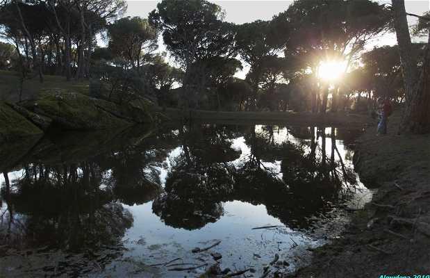 Parque Forestal El Gurugú