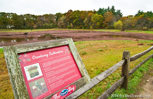 Cranberry Bog at Patriot Place