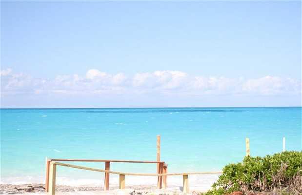 Playa del Trópico de Cáncer