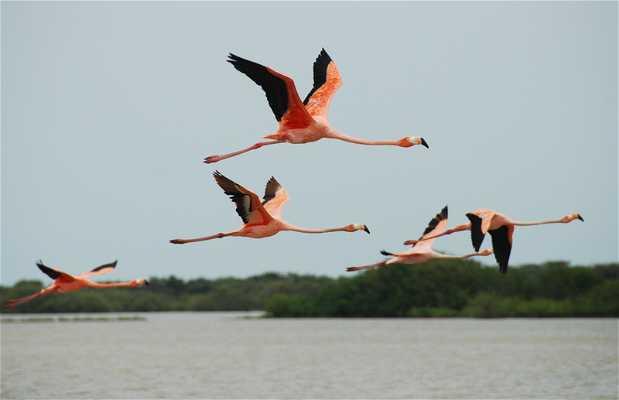 Parque de los flamingos