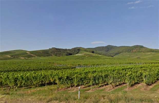 Tour vinicolo in Alsazia