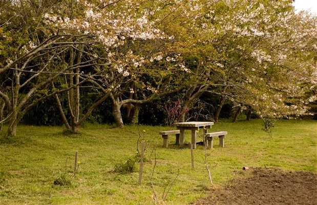 Parque Tsubaki