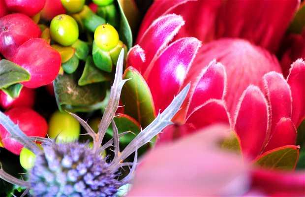 Jacaranda Plantes i Flors