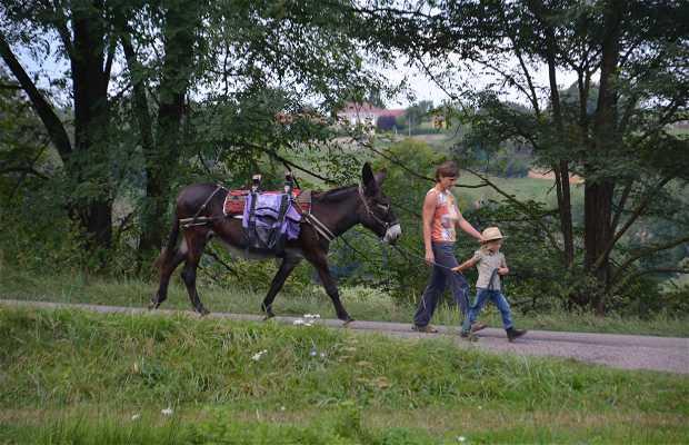Bougres d'ânes - ânes bâtés