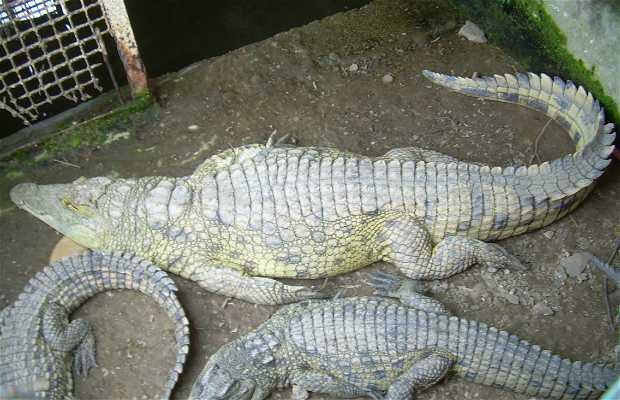 Animali a N'Zeto in Angola