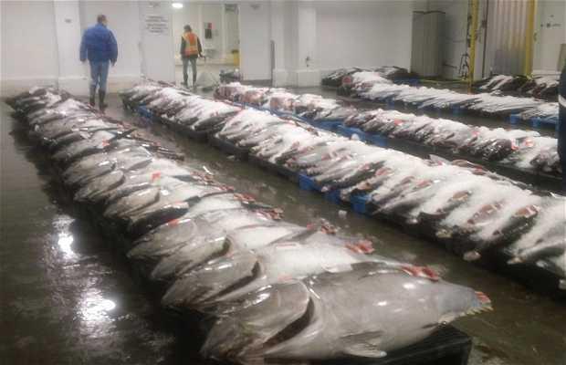 Honolulu Fish Auction