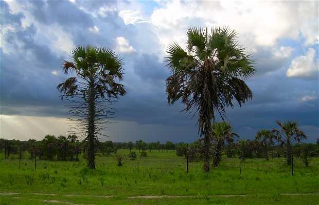 Selva ecuatorial atlántica