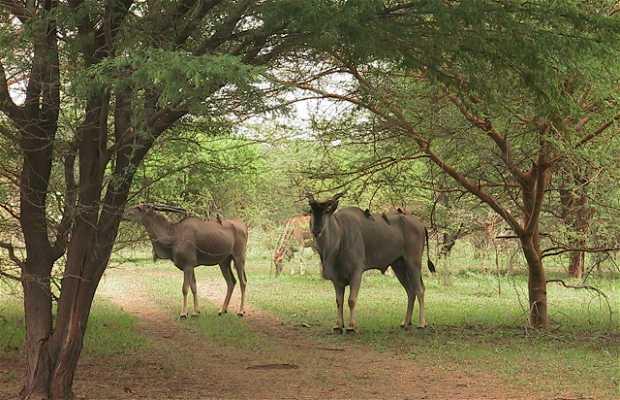 Parque de animales de Bandía