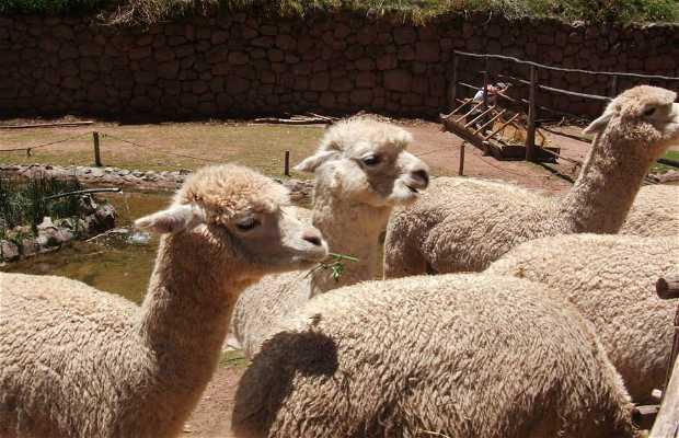Santuario Animal Cochahuasi