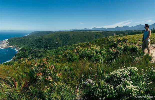 Tsitsikamma Viewpoint