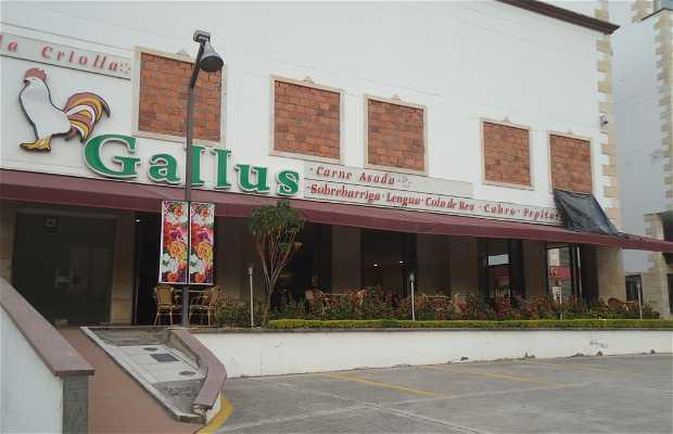 Mr Gallus