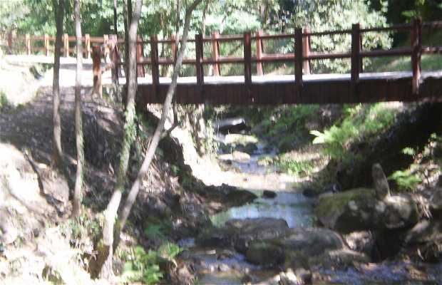 Senda Fluvial del rio San Martiño