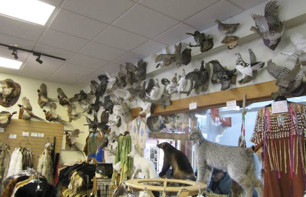 Tall Tale Taxidermy