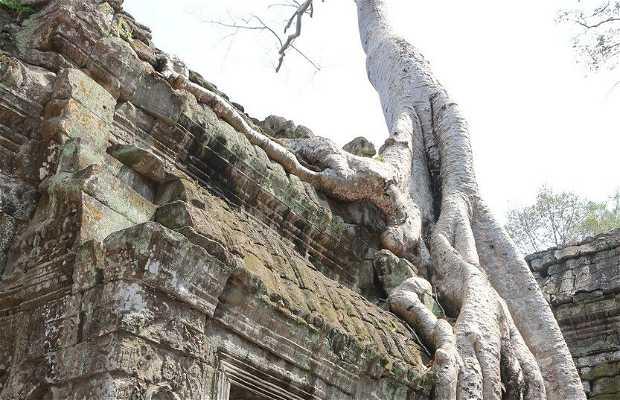 Tempio di Ta Prohm