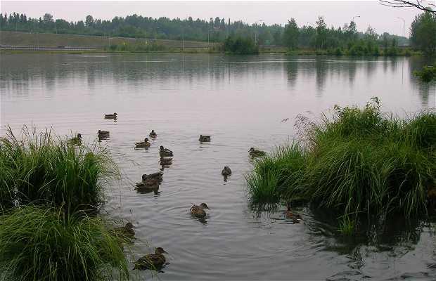 Laguna Westchester - Santuário de Pássaros Aquáticos