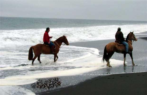 Cabalgata por la Playa de Chanco