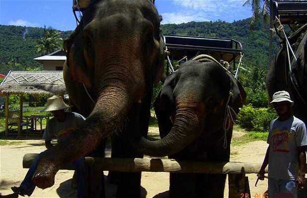 Passeio de elefante pela Ilha de Koh Samui