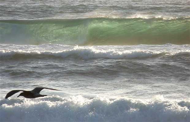 Playa Buchupureo