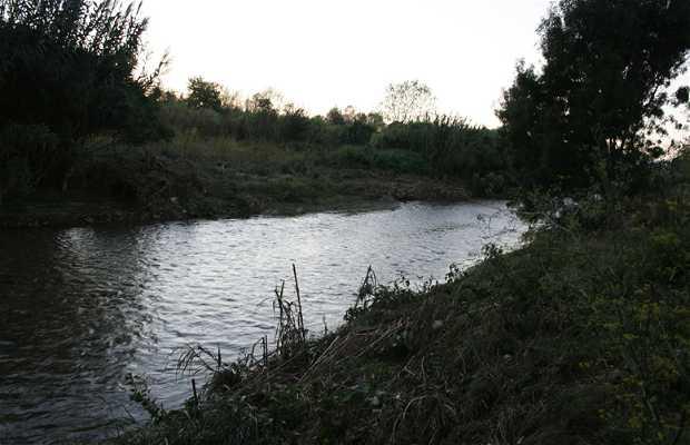 Rivière Francoli