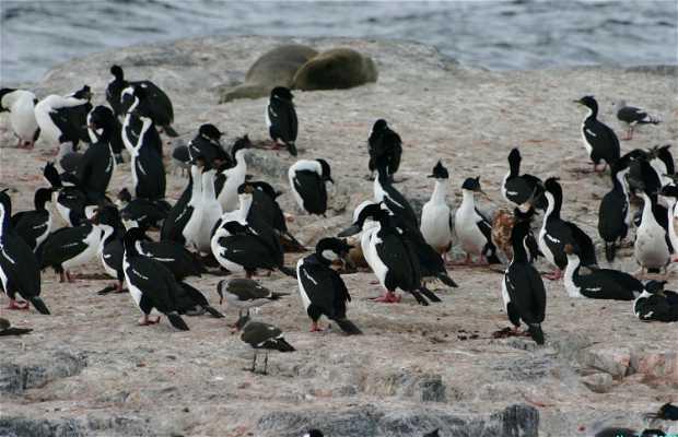 Île de los Pájaros