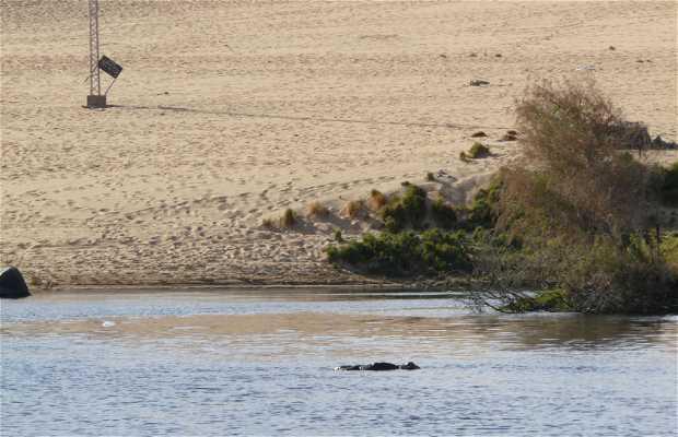 Playa del Nilo
