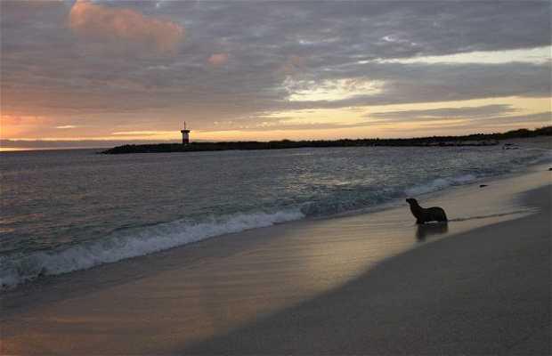 Playa Punta Carola