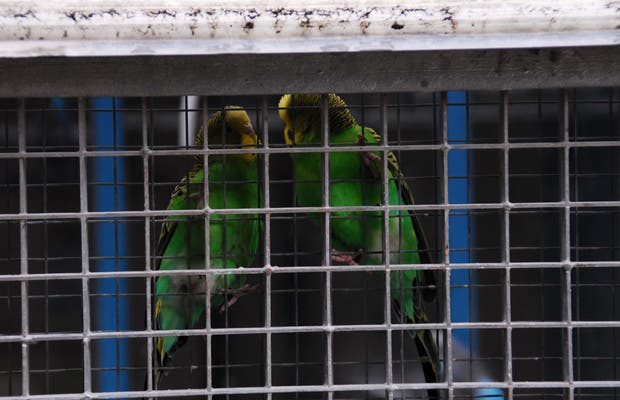 The birdcages