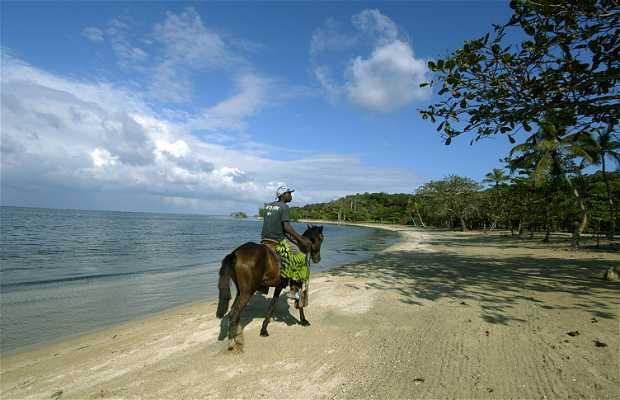 Manglares en Palmetto Bay