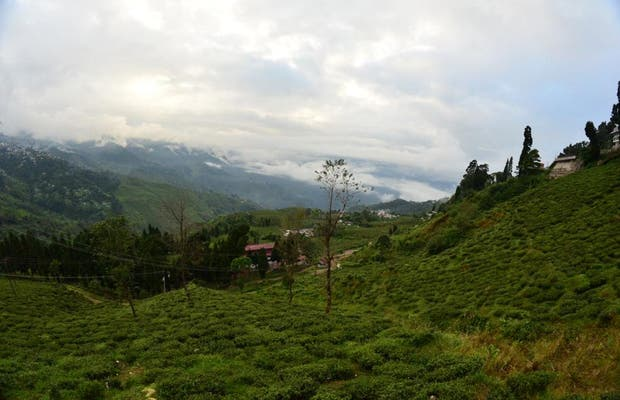 Happy Valley Tea Estate, Darjeeling