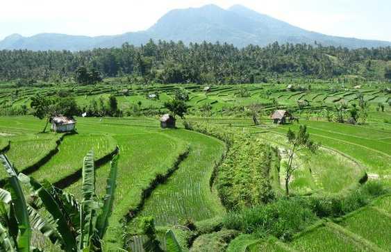 Campos de arroz de Tirta Gangga