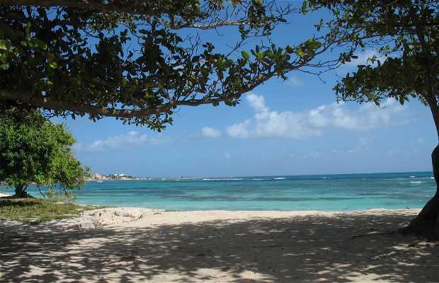 Playa de Raisins Clairs