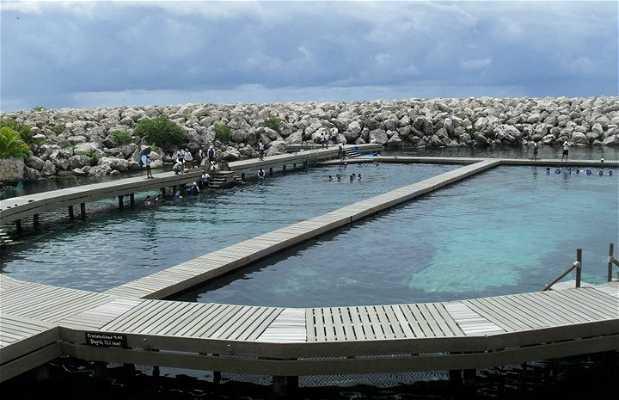 Delphinus Riviera Maya