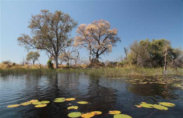 Navegar en mokoro por el delta del Okavango